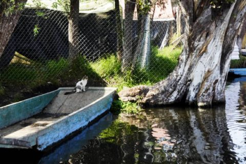 A resident cat people watching at Xochimilco.